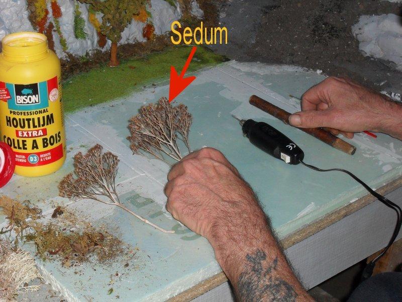 SEDUM dit Plantes à papillon comment réalisé un arbre