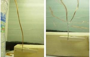 Le tronc des arbres