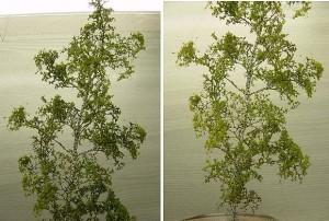 Quelques exemples d'arbre